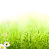 Priorità bassa del giardino della sorgente dell'erba verde Immagini Stock