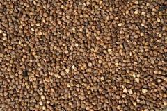 Priorità bassa del grano saraceno Fotografia Stock Libera da Diritti