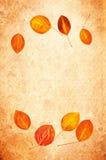 Priorità bassa del grunge del foglio di autunno Fotografia Stock
