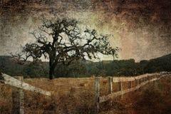 Priorità bassa del grunge dell'albero di quercia Immagini Stock Libere da Diritti