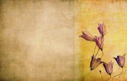 Priorità bassa del grunge ed elemento floreali di disegno Fotografie Stock