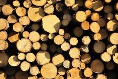 Priorità bassa del legname Fotografie Stock