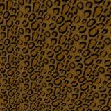 Priorità bassa del leopardo Fotografia Stock