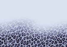 Priorità bassa del leopardo di neve Immagini Stock Libere da Diritti