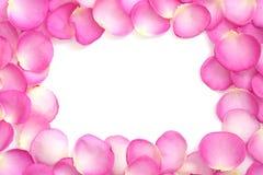 Priorità bassa del petalo di Rosa Fotografia Stock
