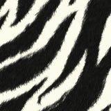 Priorità bassa del reticolo della pelle della zebra Fotografia Stock