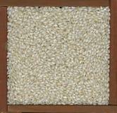 Priorità bassa del riso di Arborio Immagine Stock
