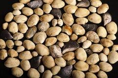 Priorità bassa del Seashell Fotografie Stock