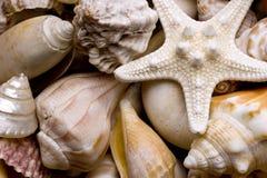 Priorità bassa del Seashell Immagine Stock