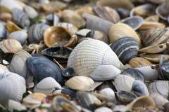 Priorità bassa del Seashell immagine stock libera da diritti