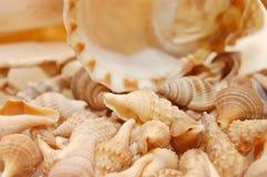 Priorità bassa del Seashell con i vari generi di coperture Fotografia Stock