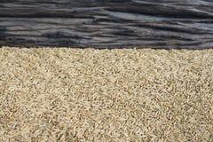 Priorità bassa del seme del riso Fotografia Stock