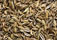 Priorità bassa del seme di finocchio Fotografia Stock Libera da Diritti