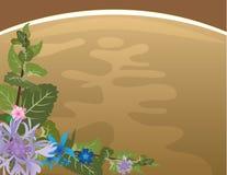 Priorità bassa del tè di erbe Immagine Stock