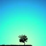 Priorità bassa dell'albero Immagini Stock Libere da Diritti