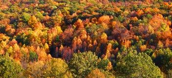 Priorità bassa dell'albero di autunno Fotografie Stock