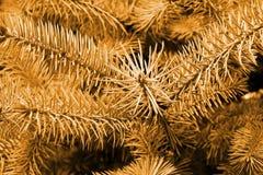 Priorità bassa dell'albero di pino nella seppia Fotografia Stock Libera da Diritti