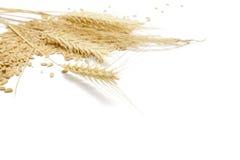 Priorità bassa dell'alimento del cereale Fotografie Stock Libere da Diritti