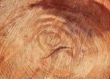 Priorità bassa dell'anello di albero Fotografie Stock Libere da Diritti