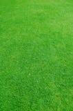 Priorità bassa dell'erba fotografie stock libere da diritti