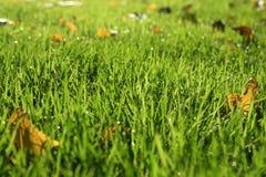 Priorità bassa dell'erba Immagini Stock