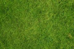 Priorità bassa dell'erba Immagine Stock