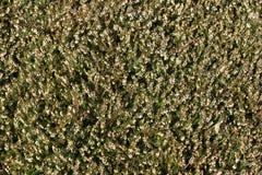Priorità bassa dell'erba Immagini Stock Libere da Diritti