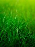 Priorità bassa dell'erba Fotografia Stock Libera da Diritti