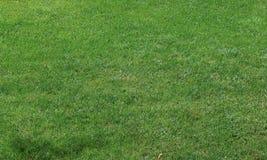 Priorità bassa dell'erba del taglio di scarsità Fotografia Stock