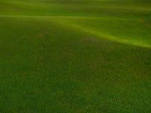 Priorità bassa dell'erba verde. Immagini Stock