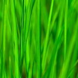 Priorità bassa dell'erba verde immagine stock libera da diritti