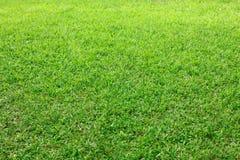 Priorità bassa dell'erba verde fotografie stock
