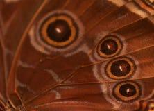 Priorità bassa dell'estratto dell'ala della farfalla Fotografia Stock