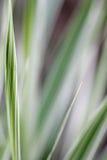 Priorità bassa dell'estratto dell'erba di nastro fotografia stock