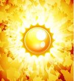 Priorità bassa dell'estratto di vettore del sole Immagine Stock Libera da Diritti