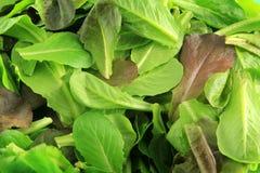 Priorità bassa dell'insalata del Romaine Fotografie Stock Libere da Diritti