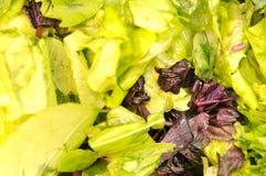 Priorità bassa dell'insalata Mixed Immagini Stock Libere da Diritti