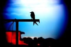 Priorità bassa dell'uccello Immagini Stock