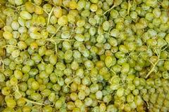 Priorità bassa dell'uva immagini stock libere da diritti
