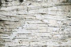 Priorità bassa della corteccia di betulla Fotografia Stock