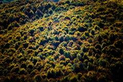 Priorità bassa della foresta Fotografie Stock Libere da Diritti