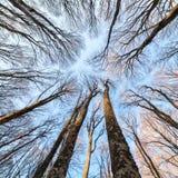 Priorità bassa della foresta Fotografia Stock