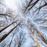 Priorità bassa della foresta Fotografie Stock
