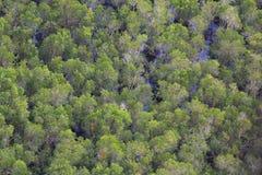 Priorità bassa della foresta Immagini Stock