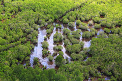 Priorità bassa della foresta Fotografia Stock Libera da Diritti
