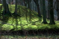 Priorità bassa della foresta Immagine Stock Libera da Diritti