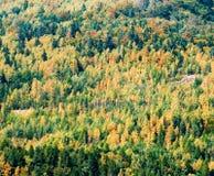 Priorità bassa della foresta di autunno Immagini Stock Libere da Diritti