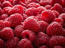 Priorità bassa della frutta del lampone Fotografia Stock