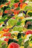 Priorità bassa della frutta e della verdura Immagine Stock