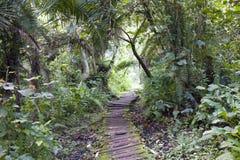Priorità bassa della giungla con il percorso ambulante immagine stock